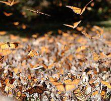 Flock of Many by Lindsay Martin