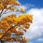 Golden Shower Tree by Naomi Hayes