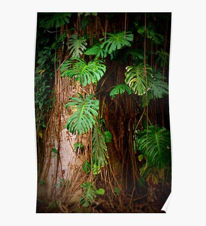 Tree on the Big Island Poster