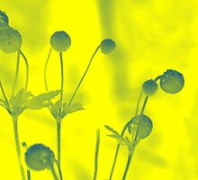 flowers in yellow by Naomi Hayes
