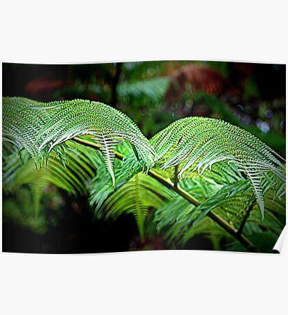 plants on the Big island Poster