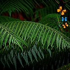 Rainforest with butterflies by Naomi Hayes
