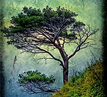 Tree and seascape by Roberto Pagani