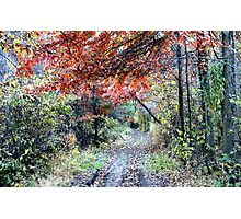The end of the road Photographic Print
