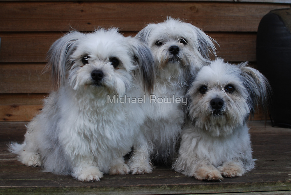 The Family by KeepsakesPhotography Michael Rowley