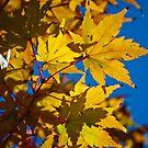 Golden Days by Phillip M. Burrow