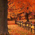 Autumn Delights by Sandy Woolard