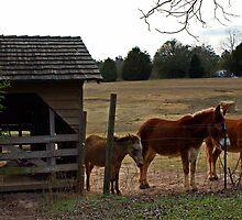 Three Mules by Linda Yates