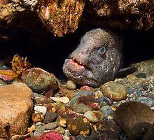 Wolf Eel In Den by Greg Amptman