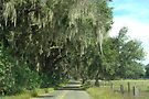 Rural Ocala/Oak Trees and Spanish Moss by AuntDot