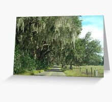 Rural Ocala/Oak Trees and Spanish Moss Greeting Card