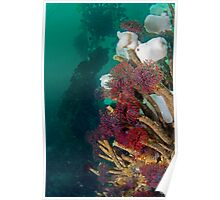 Feather Duster Worms Poster