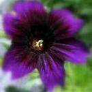 Blurred Beauty by Len Bomba
