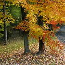 Michigan Road Autumn Colors by Adam Bykowski