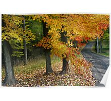 Michigan Road Autumn Colors Poster