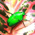 Jewel beetle  by robmac