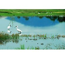 Royal Spoonbills with Mount Roundback Reflection Photographic Print