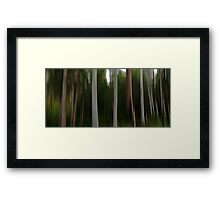 Forest of the Eucalypts Framed Print