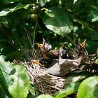 Nesting by smalshbarrick