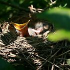 Hungry Baby Bird by smalshbarrick