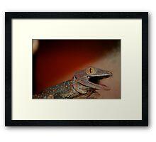 Tokay Gecko Framed Print