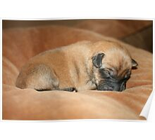 A Cozy Sleep Poster