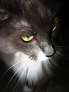 photogenic feline by schizomania