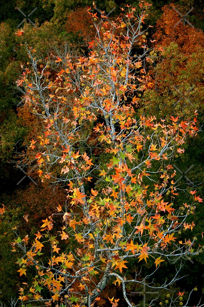 Juxtaposition in Autumn by Lisa G. Putman