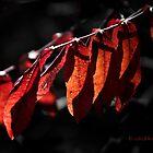 Fall Ablaze by WiredMarys