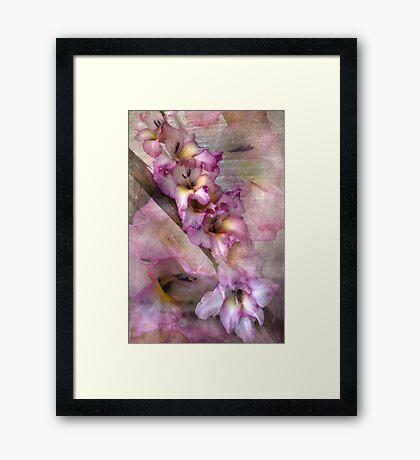 Pink Glads Framed Print