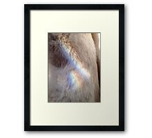 Furry Angel Framed Print