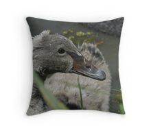 Baby Swan - Buderim Pond QLD Throw Pillow