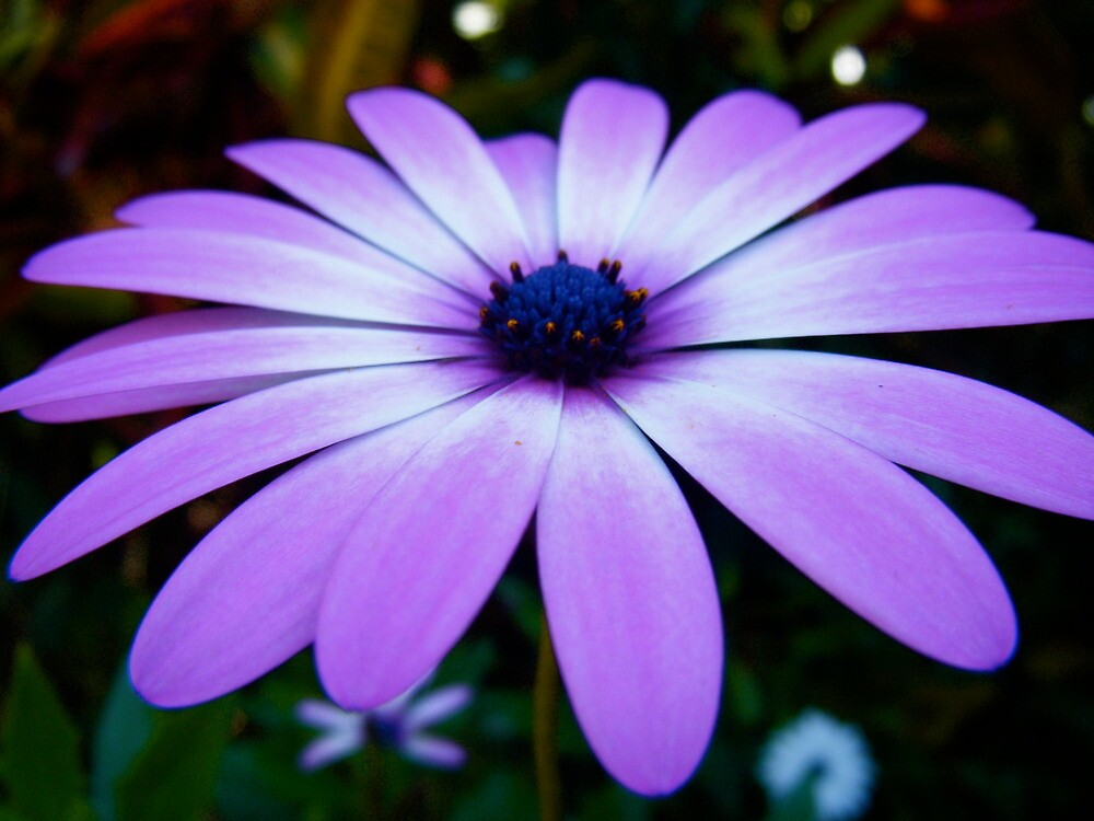 Perfect Petals by Gabrielle  Hope