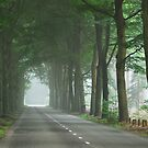 Just a misty countryroad by jchanders