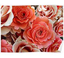 Group of Reddish Roses Poster