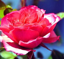 Sunshine Rose.............. by lynn carter