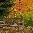 Garden Bench in Autumn by Monica M. Scanlan