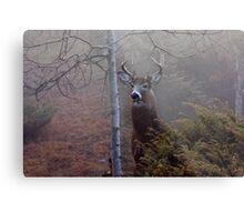 Big necked buck - White-tailed Deer Metal Print
