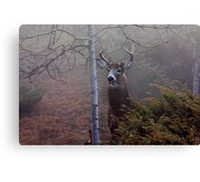 Big necked buck - White-tailed Deer Canvas Print