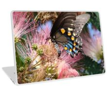 Pipevine Swallowtail Butterfly in Mimosa's Silky Blossoms Laptop Skin