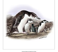 CHINSTRAP PENGUIN 5 by DilettantO