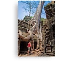 Cambodia. Angkor Thom. Giant Tree embracing Temple. Canvas Print