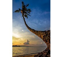 The curve of coconut tree Photographic Print