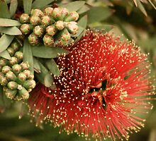 Bottle Brush by Angie Muccillo