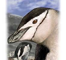 CHINSTRAP PENGUIN 7 by DilettantO