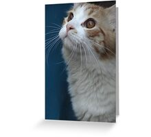 Mister What's Up Greeting Card
