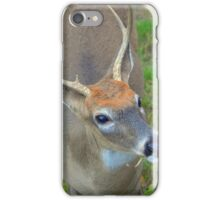 Odocoileus Virginianus - White-Tailed Deer Male Stag | Fire Island, New York iPhone Case/Skin