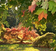 An  Autumn Scene   by fiat777
