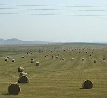 Southern Alberta hay fields by dixiemorgan