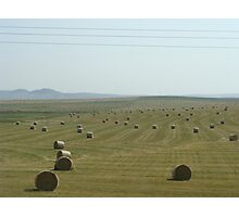 Southern Alberta hay fields Photographic Print